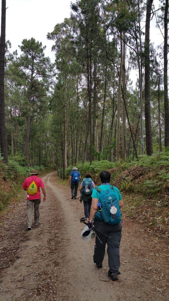 Camino de Santiago_Fresco Tours_forest enroute to Orbenlle
